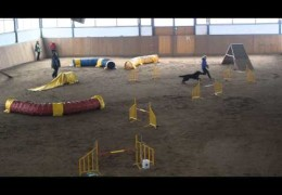 Here is One Talented Hovawart in Dog Agility