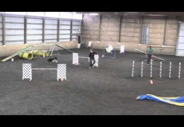 PACE Never Disappoints in Dog Agility