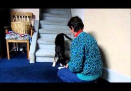 Introducing 2o 2o Dog Agility Contact Training
