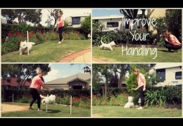 4 Easy Ways to Improve Your Dog Agility Handling
