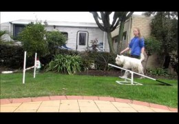 Steps on Starting Your Agility Dog on the Teeter