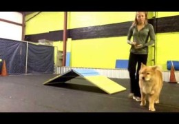 Teach your Agility Dog to Bounce off the Walls