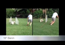 Neat Way to Analyze Your Dog Agility Wraps