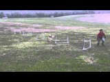 Great Dog Agility Foundation Work With Just Five Jumps