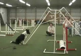 PD Loving Susan Salo's Dog Agility Jump Bumps
