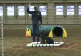 UKC Dog Agility Obstacles can be Tricky