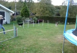 How Jenny Damm Trains Her Agility Dogs in the Garden