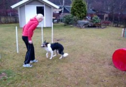 How Jenny Damm Trains Her Agility Dogs in the Garden pt 2