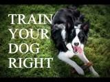 Be a Better Trainer by Learning How Your Agility Dog Learns