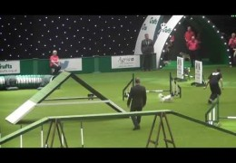 Papillons Having Fun on the 2014 Crufts Relay Course