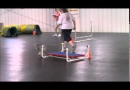 Reagan Aces His First UKC Dog Agility Course