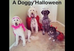 A Doggy Halloween That Will Leave You in Stitches