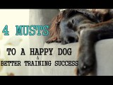 4 Must Haves Before Starting Dog Agility Training