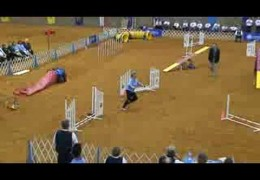 This Corgi Crushes AKC Nationals Dog Agility Course