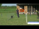Anéou the Pyrenean Shepherd With No Fear in Dog Agility pt 2