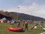 Anéou the Pyrenean Shepherd With No Fear in Dog Agility pt 3