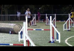 Great Dog Agility by these Belgium Malinois