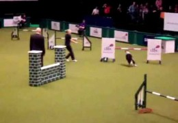 Lucy Osborne Crushes this Amazing Dog Agility Course