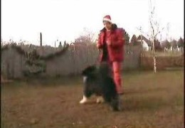 Christmas Dancing Dogs Outtakes Leave You Smiling