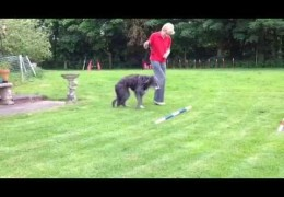 Tinker's Amazing Rehabilitation After Spinal Stroke
