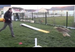 Perfect Example of Teaching Both Dog Agility Contacts
