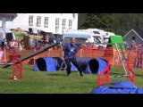 Schapendoes Excelling in Dog Agility