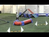 Great Way to Test Your Dog Agility Handling