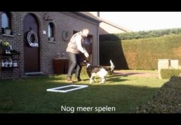 Interesting Dog Agility Running A-Frame Contact Trainer