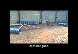 Advanced Work with Dog Agility 2on 2off Contacts