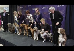2016 Westminster Kennel Club Dog Show adds More Breeds