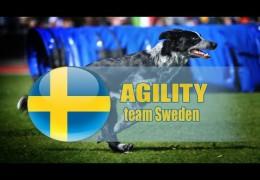 Team Sweden 2015 FCI World Dog Agility Championships