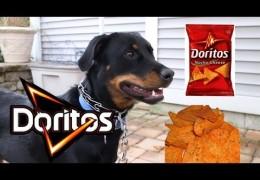 Superbowl, Doritos and Dog Agility