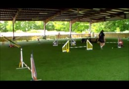 Great Examples of some Advanced Dog Agility Handling.
