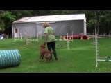Reverse Spins in Dog Agility Demonstrated