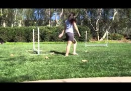 Dog Agility's Reverse Spin, Front Cross and Post Turn