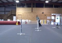Dog Agility 90 & 270 Turns for Beginners