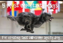 The 5 Key Elements to Successful Dog Agility Training