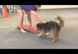 Easy Indoor Dog Agility 2on 2off Contact Training