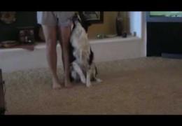 Great Indoor Dog Agility Training Ideas