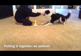 How to Teach your Dog to Have Fun Stacking Rings
