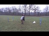 Great Dog Agility Exercises with Two Jumps