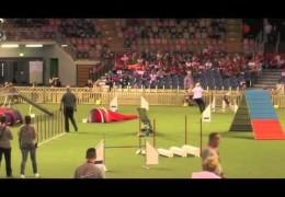 Amazing Dog Agility runs at the 2014 Agility World Championships