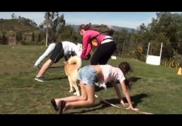 Dog Agility can be Trained by Kids When Taught Right