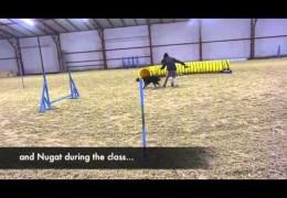 Amazing Change in Zsofia and Nugat's Dog Agility Performance
