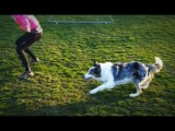 Different Agility Dogs Need Different Handling