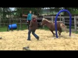 Dog and Pony Show Goes Dog Agility