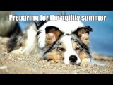 Courses to Prepare Your Dog Agility Team for Competition