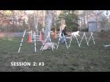 Fix for High Headed Dog Agility Weave Pole Performance
