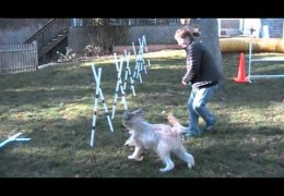Dog Agility Weave Pole Training using A-Style Poles