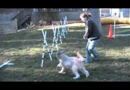 Dog Agility Weave Pole Training using A-Style Poles